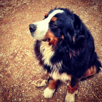 © Life Love and Yoga, 2013, Rico the dog