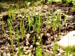 new-grass